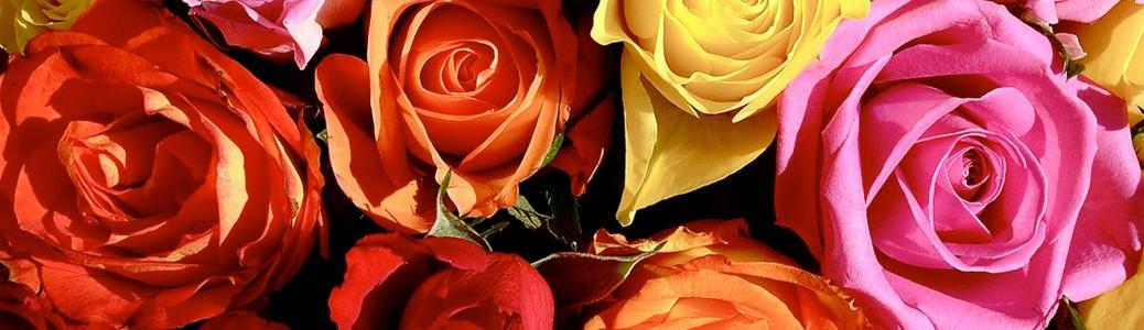 Significados significado de los colores - Significado de los colores de las rosas ...